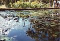 Jardin de Pamplemousses (3002662714).jpg