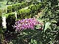 Jawaharlal Nehru Memorial Botanical Gardens, Srinagar 05.JPG