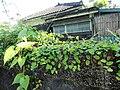 Jinghua Garden3.jpg
