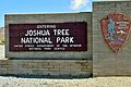 Joshua Tree N-P Cottonwood.JPG