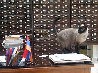 "Library cat - ""Israel"", at Gulbenkian Library, Jerusalem"