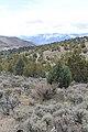 Jumbo Grade Trail - panoramio (21).jpg