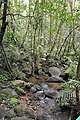 Jungle stream- delightful isn't it? (11949417803).jpg