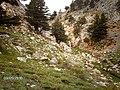 KÜCÜK TOROS KÖYÜ UFAK DERECİKLERİİ - panoramio.jpg