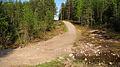 Keljonkangas - path 2.jpg
