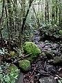 Kinabalu Park, Ranau, Sabah, Malaysia - panoramio (30).jpg