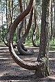 Krzywy las - 001.jpg