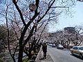 Kumamoto Castle 31 March 2011 05.jpg