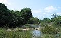 Kuruva Island3.jpg