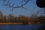 LSG H 00070 Calenberger Leinetal - Teich an der Calenburg (10).jpg
