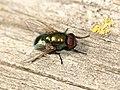 La mosca (5061293287).jpg