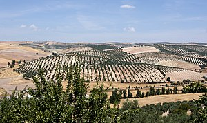 Landscape andalusia pinar.jpg