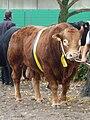 Landwirtschaftliches Hauptfest Bulle 3.jpg