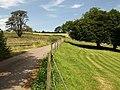 Lane at Ingsdon - geograph.org.uk - 900964.jpg