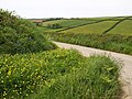 Lane near Combe Farm - geograph.org.uk - 1323193.jpg