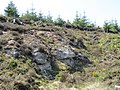 Laughter Quarry SSSI - May 2012 - panoramio.jpg