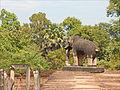Le Mébon oriental (Angkor) (6953468351).jpg
