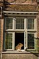 Le chien à la fenêtre (6204377829).jpg