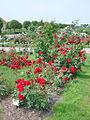 Le parc du palais de Rundale (7656219230).jpg