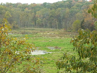 Monroe County, Indiana - The defunct Leonard Springs Reservoir, now taken over by beavers