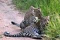 Leopard (11663697056).jpg