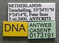 Leptothorax muscorum casent0173191 label 1.jpg