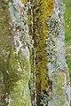 Lichen (27590314569).jpg