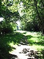 Light and shadow - geograph.org.uk - 895722.jpg