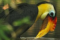 Lightmatter hornbill2