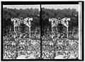 Lindbergh LCCN2016822883.jpg
