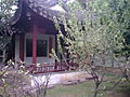 Lingering garden peach blossom dock.jpg