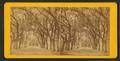 Live Oak Avenue, Bonaventure Cemetery, Savannah, Ga, from Robert N. Dennis collection of stereoscopic views 4.png