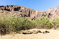 Lobos marinos (Zalophus californianus wollebaeki), Punta Pitt, isla de San Cristóbal, islas Galápagos, Ecuador, 2015-07-24, DD 06.JPG