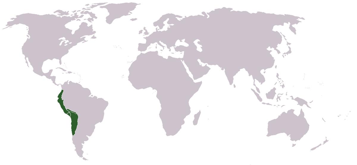 που χρονολογείται από τη Νότια Αμερική
