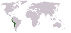World map, with Inca territory