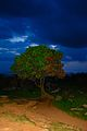 Lonely Tree on Hill top.jpg