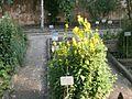 Lorto-botanico-di-padova-2016 28340423396 o 05.jpg