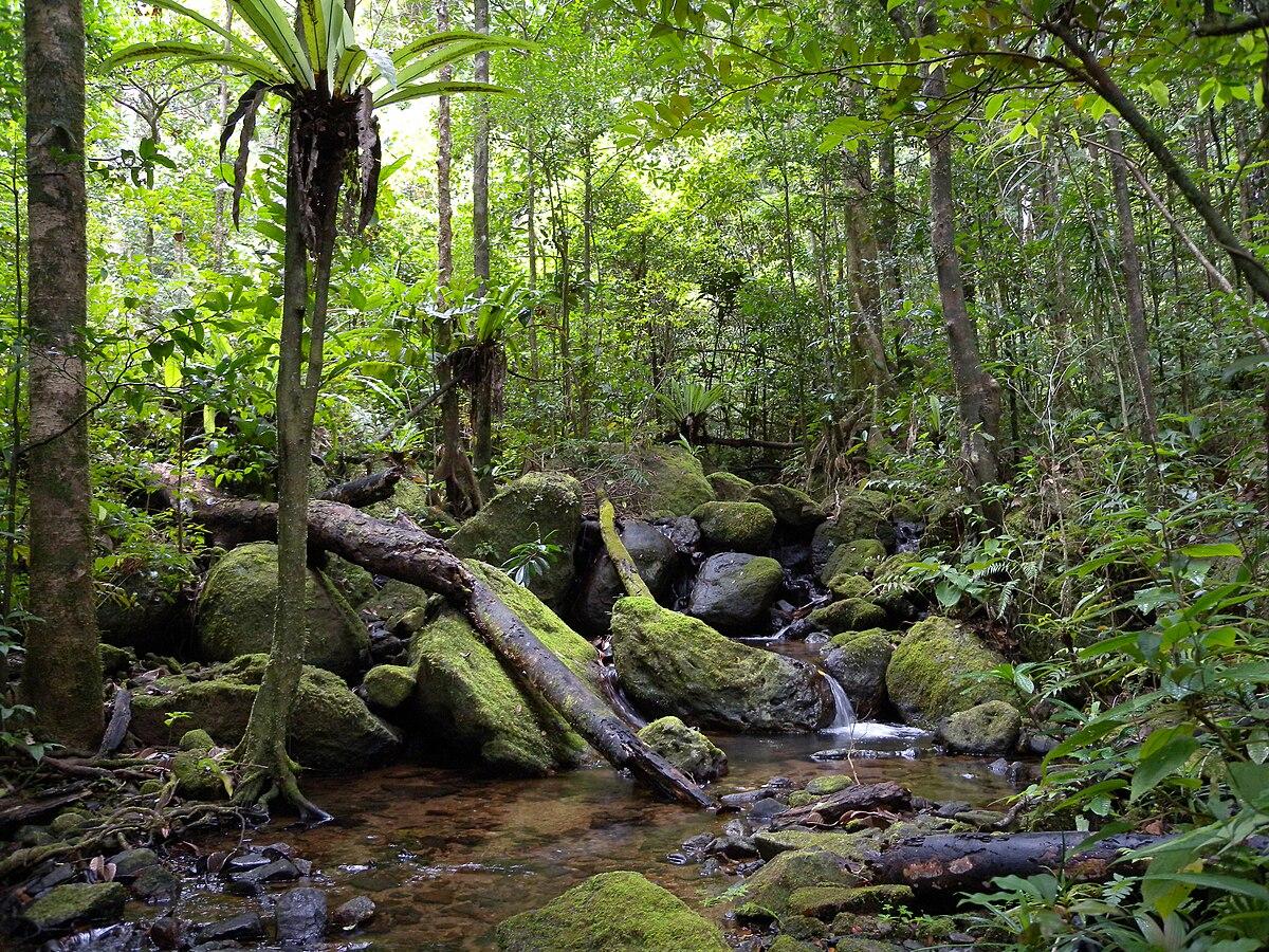 Forets Des Basses Terres De Madagascar Wikipedia