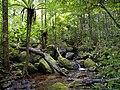 Lowland rainforest, Masoala National Park, Madagascar.jpg