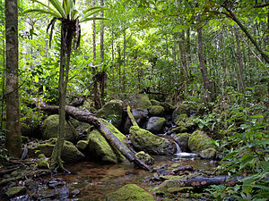 Ecoregions of Madagascar - Image: Lowland rainforest, Masoala National Park, Madagascar