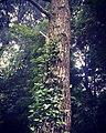 Luxury tree.jpg