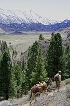 MARSOC mule Packing