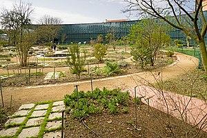 Muséum de Toulouse - Jardin Henri Gaussen in winter