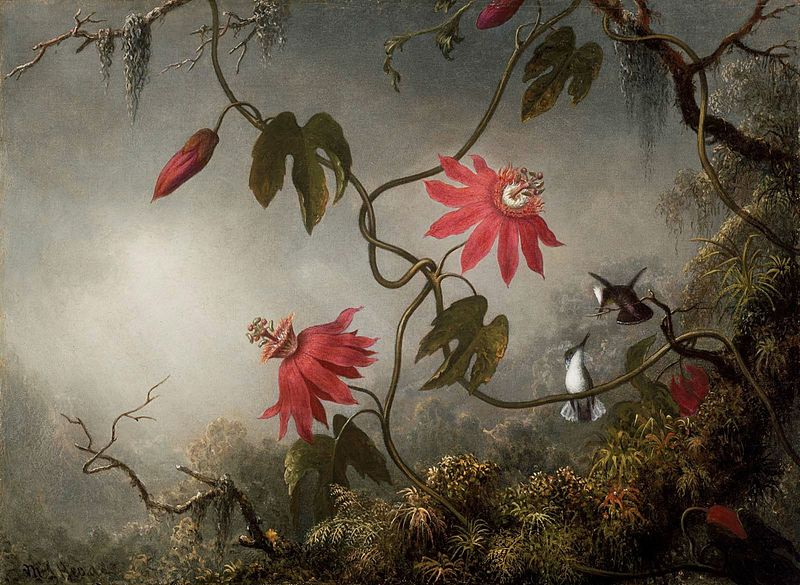 MJ Heade Passion Flowers and Hummingbirds