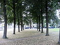 Maastricht 2012 bomen op Koningsplein.JPG