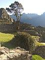 Machu Picchu, Peru (36799244221).jpg