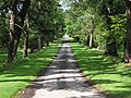 Main drive from Balcaskie House - geograph.org.uk - 1450882.jpg