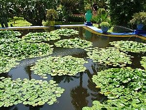 ������� ������� ������ ������ 300px-Majorelle_Garden,Marrakech,Morocco.jpg
