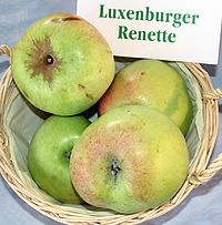 Malus-Luxenburger-Renette.jpg