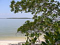 Mangrove Island, Ten Thousand Islands, NPSPhoto, D.Grimes (9099546183).jpg
